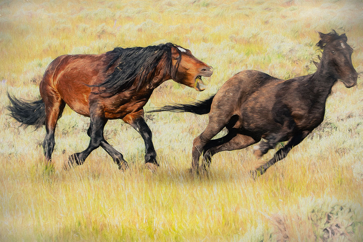 Mustang Ranch Cody Wyoming by Jim Berger